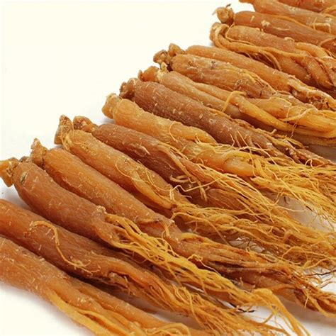 Ginseng China buy wholesale herbal products from china herbal