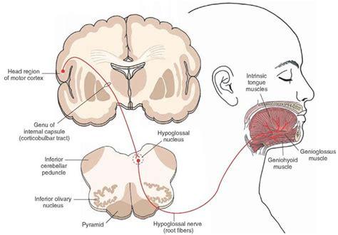 nevralgie testa nevralgia sintomi testa e collo dolori nervi sintomi