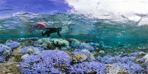In pictures: Coral bleaching event spreads to Japan Warning Systems
