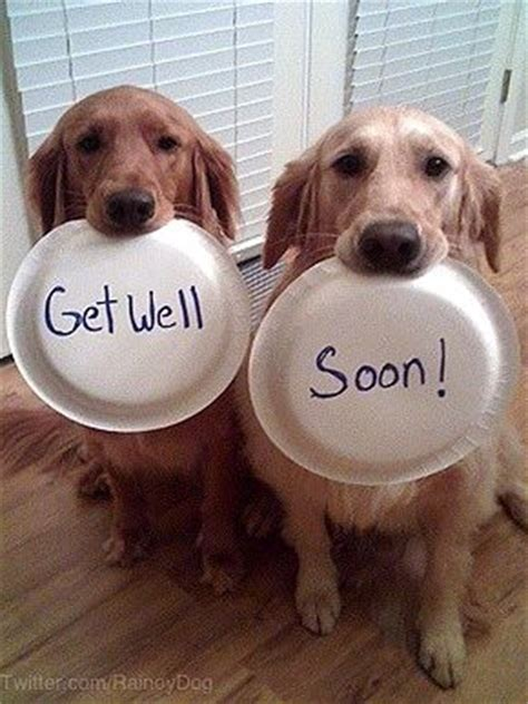 get well soon puppy pictures of get well soon get well soon cards pictures of