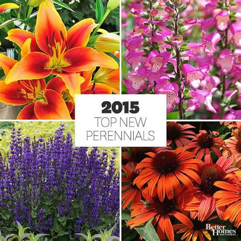 new perennials for 2015 perennials