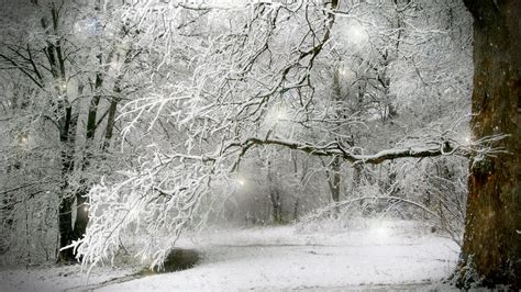 snow wallpaper pinterest images of winter forest scenes scenes of winter