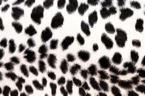 wallpaper black print black cheetah wallpapers wallpaper cave