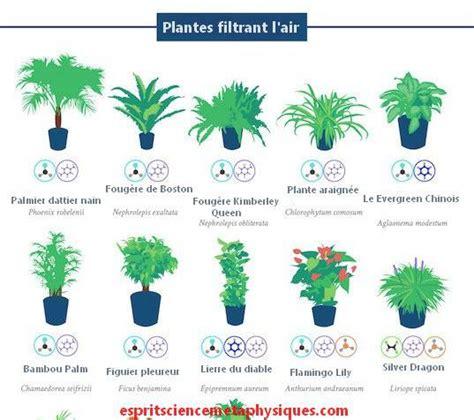 Plantes Appartement Sombre by Top 18 Des Plantes D Int 233 Rieur D 233 Polluantes Qui Purifient