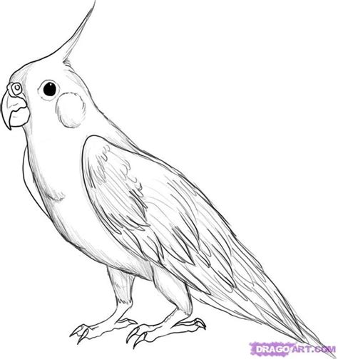 284 best images about drawing birds on pinterest bird