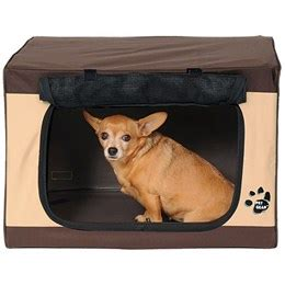 chihuahua dog houses chihuahua house training dog breeds picture