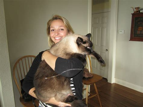 Coon Light My Friend S Giant Cat He Isn T Even Two Years Old Yet
