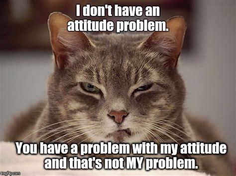 Sarcastic Cat Meme - sarcasm imgflip