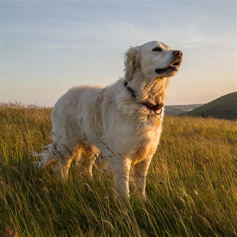 canine holistic health therapy diploma  centre