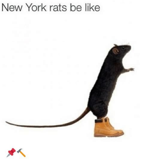 Rats Ass Meme - funny be like and new york memes of 2016 on sizzle