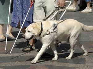 how to seeing eye dogs 13 facts that will make you happy business insider