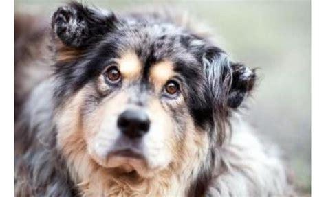seattle humane society dogs seattle humane society petfinder foundation