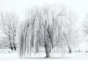 Duvet Cover Frozen Winter Willow Photograph By Mike Dawson