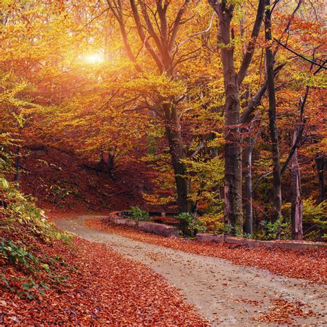 new fall colors new quot fall foliage quot spectacular
