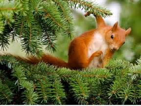 squirrel wallpapers fun animals wiki videos pictures stories
