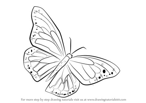 Monarch Design by Learn How To Draw A Monarch Butterfly Butterflies Step