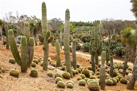 cactus garden mallorca botanical  photo  pixabay