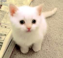 Barnes And Noble Littleton Colorado White Kitten Aaronmritchey