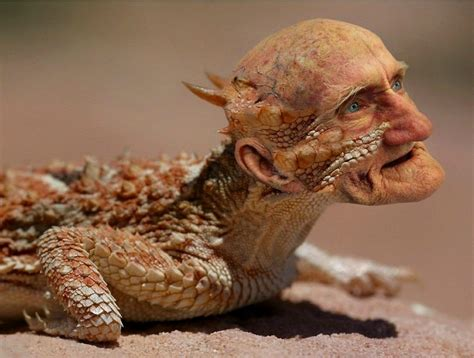 the human lizard lizard by hidreley brasil photoshop creative