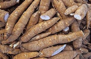 manfaat singkong ubi kayu bagi kesehatan