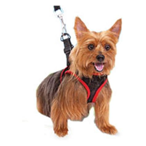 Most Comfortable Harness For Dogs by Other Now For Medium Size Dogs Comfy