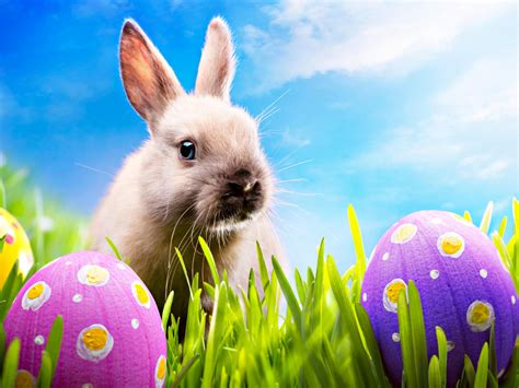 happy easter happy easter all my fans wallpaper