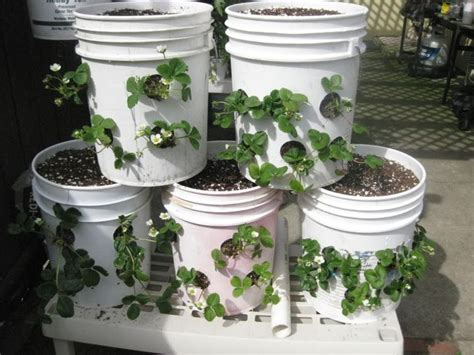5 Gallon Planter by Plants For Sideways Planter Five Gallon Ideas