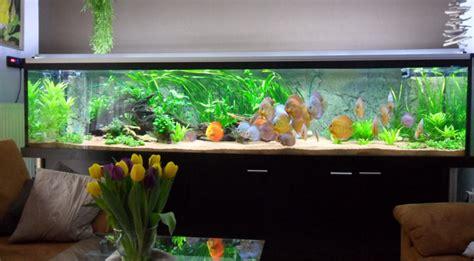 led beleuchtung aquarium erfahrungen einbau led beleichtung f 252 r aquarium mit diskuss mit