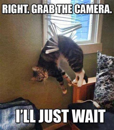 Funny Ass Meme - funny animal pictures of the day 24 pics