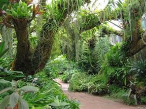 Backyard Pathways epiphytes