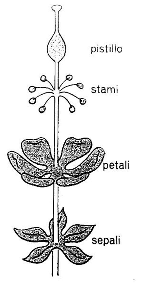 il fiore scuola primaria materiale didattico sul fiore