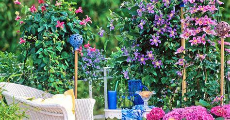 pflanztipps garten clematis f 252 r den balkon pflanztipps und bew 228 hrte sorten
