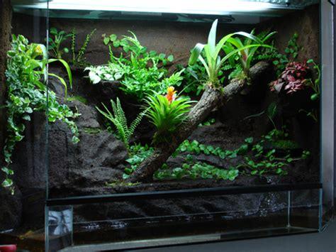 terrarium pflanzen anleitung testbericht neu