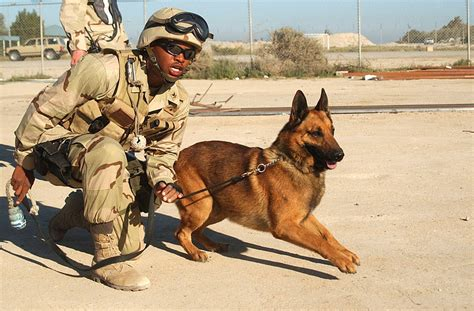 does target allow dogs allow dogs to retire with their former handlers forcechange