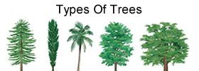 different types of trees plants difference between descriptive analysis and
