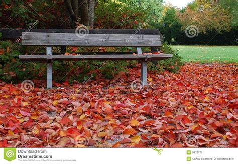 autumn park bench park bench in autumn stock image image 5833771