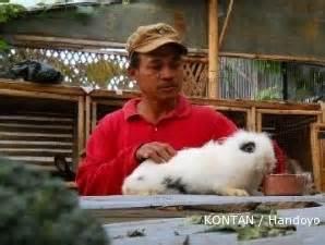 Harga Pakan Kelinci Morning Sun sentra kelinci lembang terbelenggu jejaring pengepul