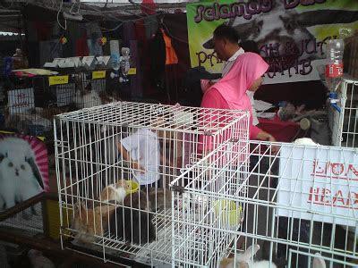 Sho Kucing Paling Murah the story penjual anak kucing anggora murah