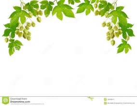 hop branches with cones stock images image 16018974