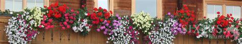Garten Blumen 1093 by Balkonkisten Beispiele Balkon Und Garten Sixtus