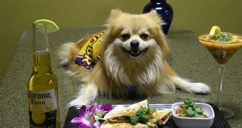 best food for pomeranians feeding tips to pomeranian pets world
