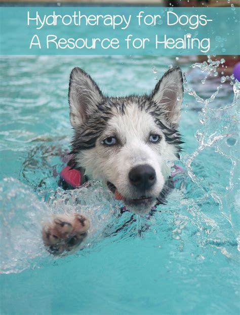 hydrotherapy for dogs hydrotherapy for dogs a resource for healing dogvills