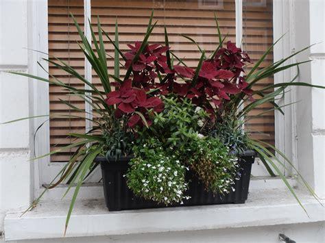 winter window boxes doddington place gardens 187 winter colour in window boxes