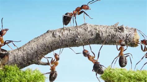was tun gegen kellerasseln im garten was hilft gegen ameisen im garten was hilft gegen ameisen