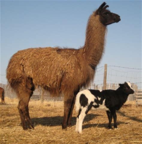 concerns  keeping  types  livestock