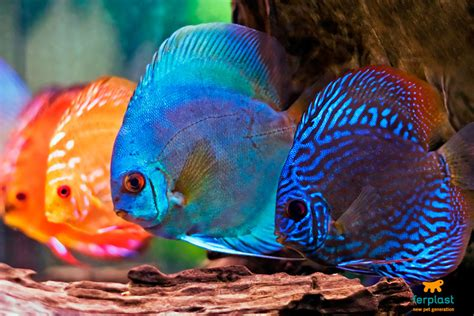 illuminazione neon illuminazione dell acquario neon o led ferplast