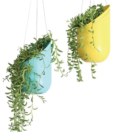 Hanging Plants Indoor: Ergonomic, Elegant, and Stylish