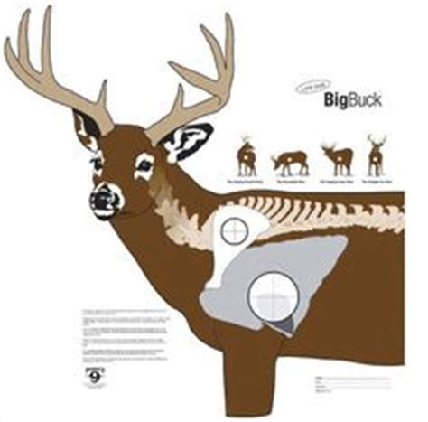 free printable deer targets for shooting 1000 images about hunting targets on pinterest shooting