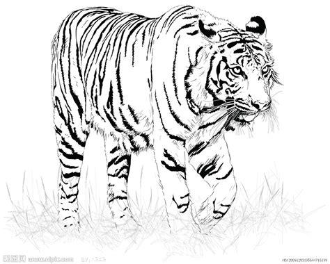 sketchbook hitam 黑白虎矢量图 野生动物 生物世界 矢量图库 昵图网nipic