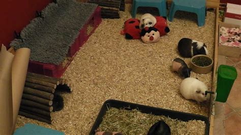 how to make a guinea pig bed all about guinea pig bedding youtube